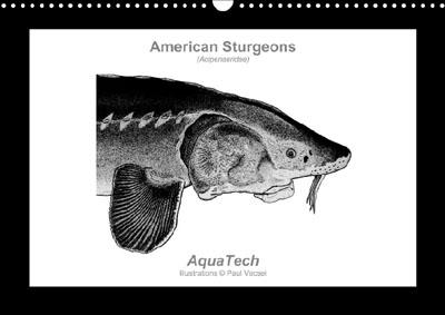 American Sturgeons - Perpetual Calendar